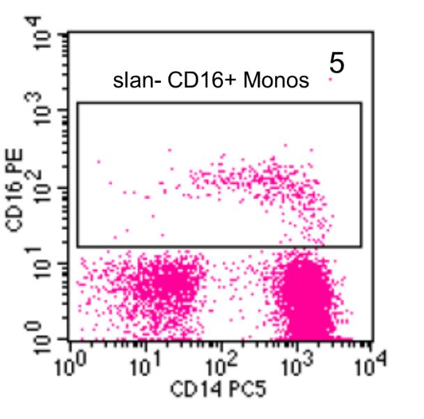 Human Monocytes